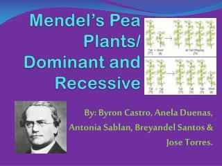 Mendel's Pea Plants/ Dominant and Recessive