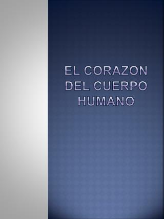 El Corazon Del Cuerpo Humano