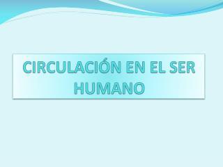 CIRCULACI�N EN EL SER HUMANO