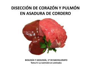 DISECCIÓN DE CORAZÓN Y PULMÓN  EN ASADURA DE CORDERO