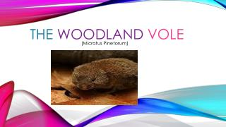 THE WOODLAND VOLE