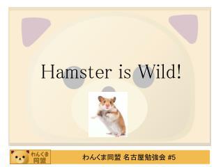 Hamster is Wild!