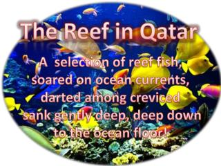 The Reef in Qatar