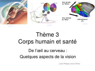 Th me 3  Corps humain et sant
