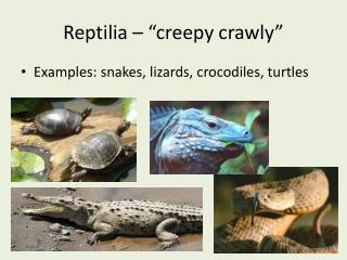 """Reptilia  – """"creepy crawly"""""""