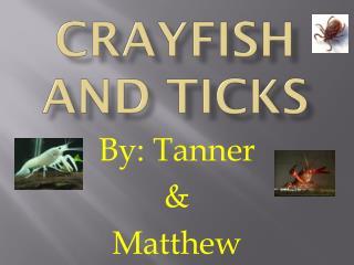 Crayfish and Ticks