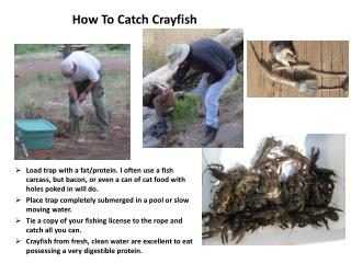 How To Catch Crayfish
