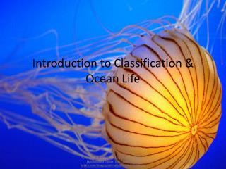 Introduction to Classification & Ocean Life