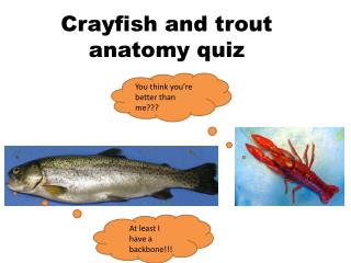 Crayfish and trout anatomy quiz