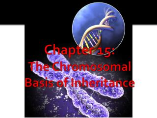 Chapter 15:         The Chromosomal Basis of Inheritance