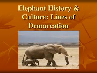 Elephant History &  Culture:  Lines of Demarcation