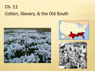 Ch. 11  Cotton, Slavery, & the Old South