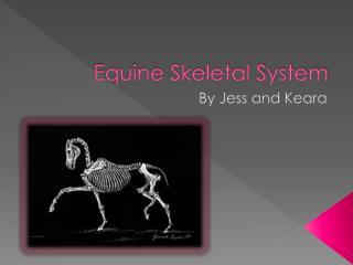 Equine Skeletal System
