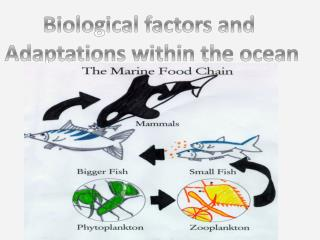 Biological factors and  Adaptations within the ocean