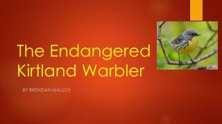 The Endangered Kirtland Warbler