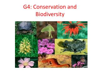 G4: Conservation and Biodiversity