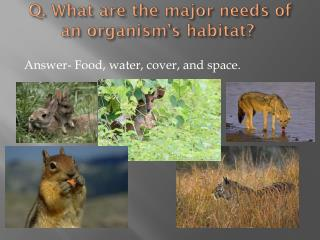 Q. What are the major needs of an organism's habitat?