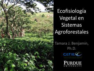 Ecofisiología Vegetal en Sistemas Agroforestales