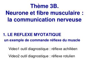 Th�me 3B.  Neurone et fibre musculaire : la communication nerveuse