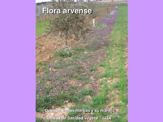 Cultivos, malas hierbas y su manejo