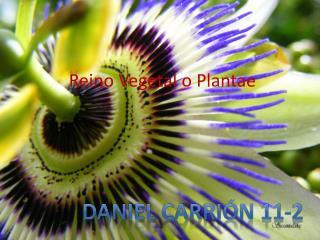 Reino Vegetal o  Plantae