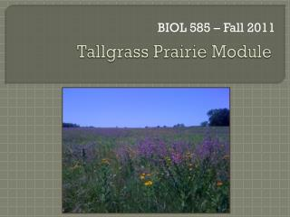 Tallgrass Prairie Module