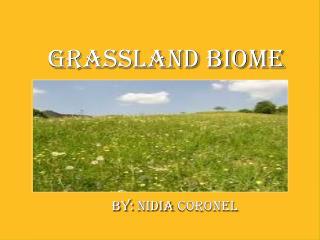 Grassland Biome                            By:  nIDIA  coronel