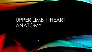 Upper limb + heart anatomy