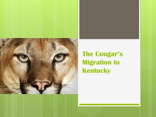 The Cougar's Migration to Kentucky