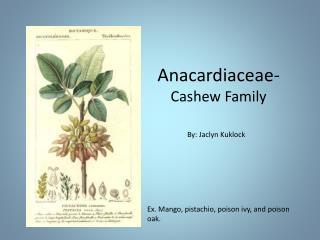 Anacardiaceae-  Cashew Family