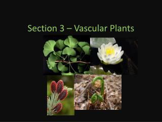 Section 3 � Vascular Plants