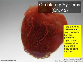 Circulatory Systems (Ch. 42)