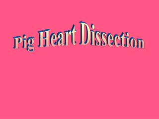 Pig Heart Dissection