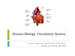 Human Biology: Circulatory System