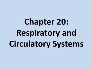 Chapter 20:  Respiratory and Circulatory Systems