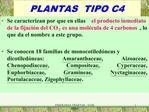 PLANTAS  TIPO C4
