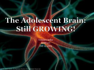 The Adolescent Brain:  Still GROWING!