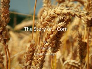 The Story of… Corn