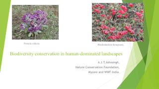 Biodiversity conservation in human-dominated landscapes