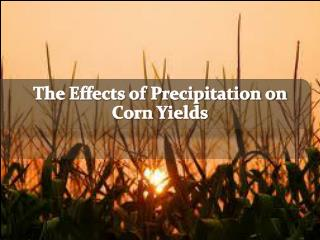 The Effects of Precipitation on Corn Yields