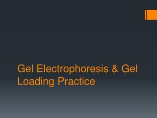 Gel  Electrophoresis  &  Gel  Loading  Practice