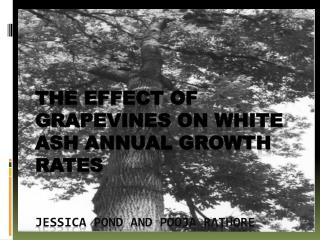 THE effect of Grapevines on white ash annual growth rates Jessica Pond and  Pooja rathore