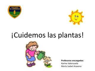 ¡Cuidemos las plantas!