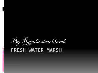 Fresh water Marsh