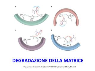 Degradazione della matrice