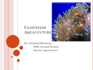 Clownfish Aquaculture