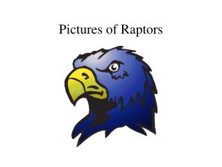 Pictures of Raptors