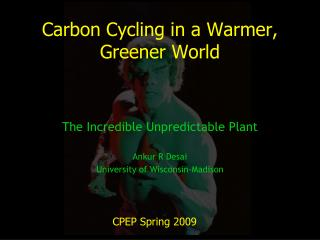 Carbon Cycling in a Warmer, Greener World
