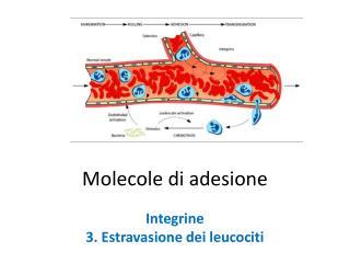 Molecole di adesione