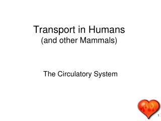 Transport in Humans  (and other Mammals)